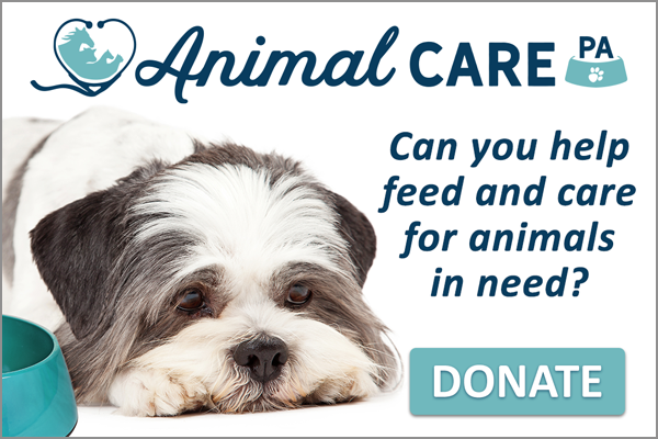 """Consider donating to celebrate a birthday or even honor a life. When you donate you can choose which program you want it to go towards, or choose """"Area of Greatest Need"""" to allow Animal Care PA to put it where it is needed the most. You can even set your donation frequency to one time to monthly or even annually!"""